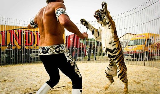 Dresseur de tigre H/F